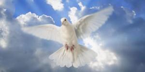 Голубь, символ мира летит через тучи