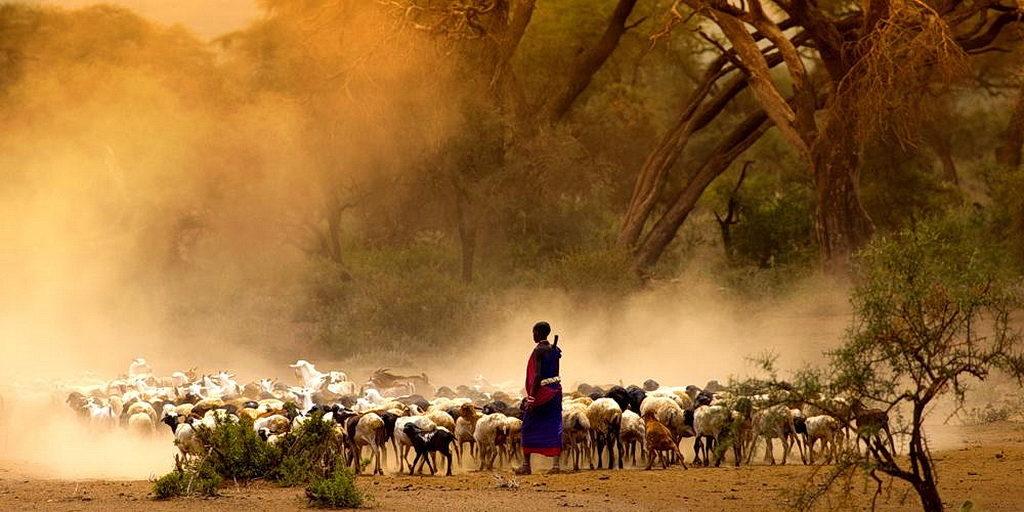 Вовлечение членов церкви охватывает более 3000 мест в Уганде