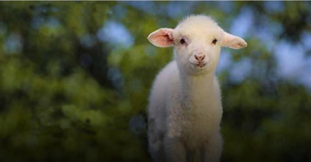 Как адвентисты седьмого дня относятся к празднику Пасхи и писала ли об этом что-либо Эллен Уайт?