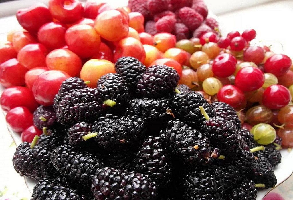 Шовковиця, вишня, черешня - чим корисні літні ягоди