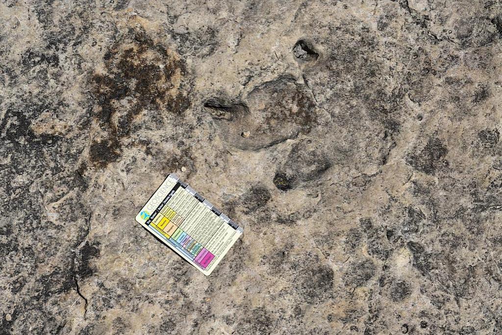 Прекрасно сохранившийся след, оставленный динозавром теропод. На этом следе хорошо видны отпечатки, оставленные когтями динозавра. [Фото: Институт геофизических исследований]