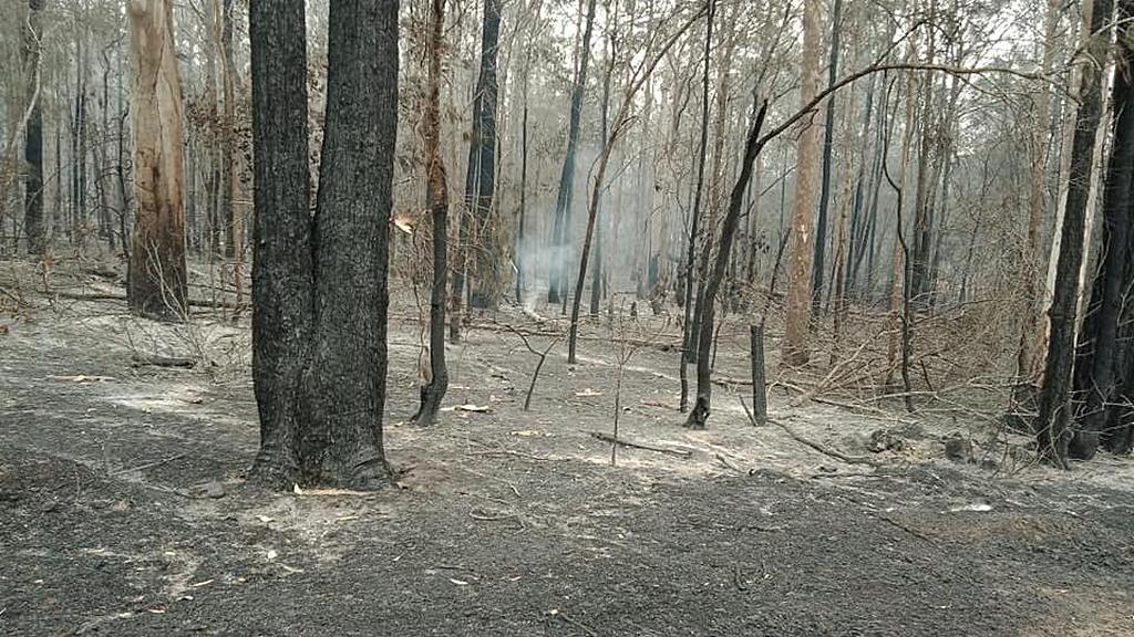 Сожженный кустарник, непосредственно граничащий с территорией адвентистской школы Мэннинга в Тинони, Новый Южный Уэльс, Австралия. [Фото: Adventist Record]