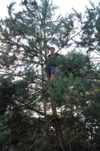 Как же быть в лесу и не залезть на дерево?