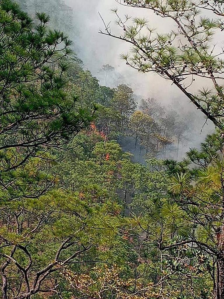 Лесные пожары в Сальвадоре начались в конце марта 2021 года и повредили сотни акров гористой местности в штате Морасан. [Фото: Унион Сальвадора]